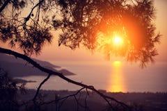 Pinho na costa do mar no por do sol imagem de stock royalty free