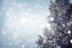Pinho ou abeto da árvore de Natal com queda de neve no fundo do céu no inverno Fotografia de Stock