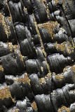 Pinho queimado Fotos de Stock Royalty Free