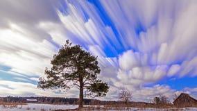 Pinho separadamente crescente contra o céu blurry vídeos de arquivo