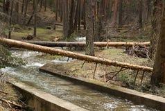 Pinhos caídos sobre o rio nas montanhas de Segovia Vendaval, furacão imagem de stock