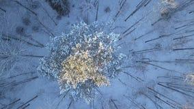 Pinhos cobertos de neve do acercamento aéreo vídeos de arquivo