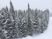 Pinhos cobertos de neve do elevador de esqui Fotos de Stock