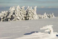 Pinhos congelados Fotografia de Stock
