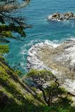 Pinhos curvados litorais nas rochas acima do rolamento pitoresco do mar nos penhascos foto de stock