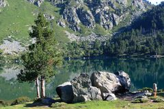 Pinhos de montanha em Pyrenees Imagens de Stock