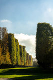 Pinhos e ciprestes que alinham um passeio ajardinado Foto de Stock Royalty Free
