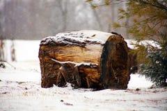 Pinhos e neve durante árvores nevando do inverno, log sob a neve Conceito do inverno Foto de Stock Royalty Free