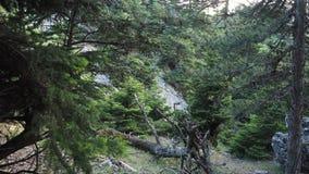 Pinhos gregos e parque nacional de Parnitha do cedars_Mount, Grécia Imagens de Stock Royalty Free
