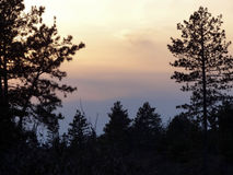 Pinhos mostrados em silhueta contra o céu pastel imagens de stock royalty free