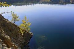 Pinhos no banco da lagoa Fotos de Stock Royalty Free