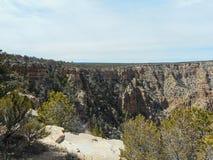 pinhos no Grand Canyon imagens de stock