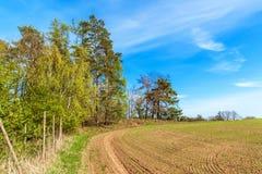 Pini al bordo di una foresta vicino ad un campo in repubblica Ceca Giorno di primavera nel paesaggio rurale della foresta firewoo fotografia stock libera da diritti