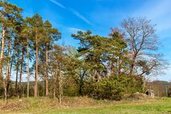 Pini al bordo di una foresta vicino ad un campo in repubblica Ceca Giorno di primavera nel paesaggio rurale della foresta firewoo fotografia stock