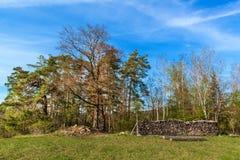 Pini al bordo di una foresta vicino ad un campo in repubblica Ceca Giorno di primavera nel paesaggio rurale della foresta firewoo immagine stock