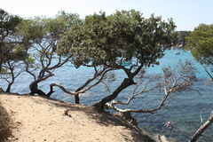 Pini al lato del mare Immagini Stock Libere da Diritti