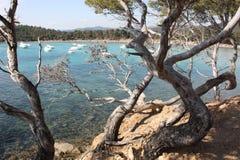 Pini al lato della spiaggia Fotografia Stock Libera da Diritti