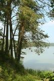 Pini alti sulla riva del lago blu Fotografia Stock