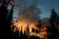 Pini Burning Immagine Stock
