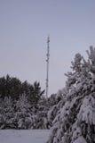 Pini dell'abete rosso del paesaggio di inverno Fotografia Stock Libera da Diritti