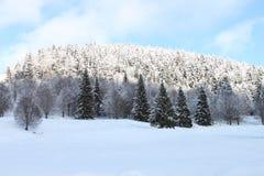 Pini della foresta di inverno sulla montagna coperta di neve immagini stock libere da diritti