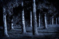 Pini di luce della luna Fotografia Stock Libera da Diritti