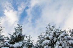 Pini di Snowy sotto il cielo nuvoloso Fotografia Stock