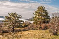 Pini e nuvole in LA BARRANCA Spagna Fotografie Stock Libere da Diritti