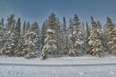 Pini e strada coperti di neve Immagine Stock Libera da Diritti