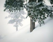 Pini freschi della neve di paesaggio della montagna di inverno Fotografia Stock