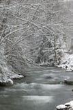 Pini innevati dal lato di un fiume nell'inverno. Immagine Stock