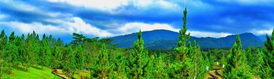 Pini montani Fotografia Stock Libera da Diritti