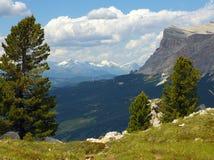 Pini montani con le alpi di Stubai dalle dolomia, Italia Immagini Stock Libere da Diritti