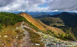 Pini montani sul pendio Fotografia Stock Libera da Diritti