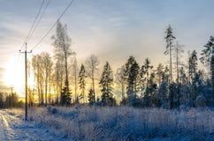 Pini nell'inverno da una strada campestre al tramonto Immagini Stock