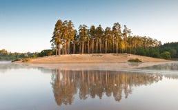 Pini, sabbia ed acqua Fotografia Stock