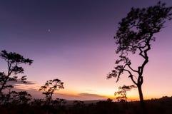 Pini in siluetta al tramonto immagine stock libera da diritti