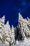 Pini stellati Fotografia Stock Libera da Diritti