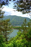 Pini sul lato del lago Immagine Stock Libera da Diritti