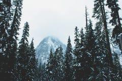 Pini sul pendio di collina, lago snow, Washington fotografie stock libere da diritti