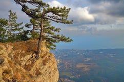 Pini sull'orlo della scogliera alta sopra Jalta in Crimea Immagini Stock
