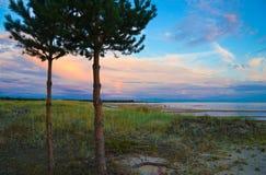 Pini sulla spiaggia Immagine Stock Libera da Diritti