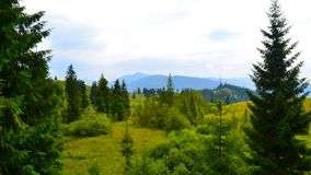Pini sulle montagne carpatiche su belle del fondo fotografia stock