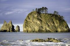 Pini sulle rocce dell'oceano fotografia stock libera da diritti