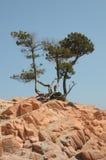 Pini sulle rocce rosse Fotografia Stock Libera da Diritti