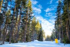 Pini verdi ed il percorso dello sci su nuvoloso blu Immagini Stock