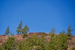 Pini verdi su una cresta rossa immagine stock