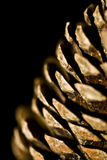 Pinion. From a pine-tree Royalty Free Stock Image