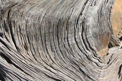 Pinion Pine Wood Royalty Free Stock Photos