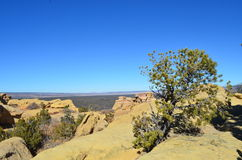 Pinion Tree growing on Rock. This shot was taken in Central New Mexico near the el malpies lave flow Stock Photo